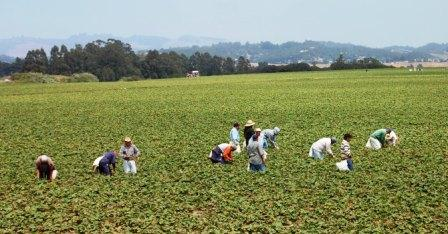 ouvriers agricoles mexicains à Salinas